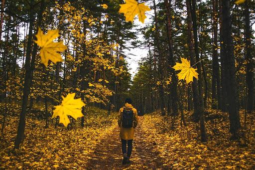 10 Fantastic Fall Activities